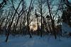 Primeval forest. (MIKI Yoshihito. (#mikiyoshihito)) Tags: primeval forest primevalforest 原始林 野幌森林公園 hokkaido snow snowshoe
