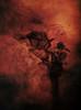 Phoenix (Jenny!) Tags: phoenix crow photomontage texture red bird skull