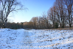 IMG_3113 (wozischra) Tags: berlin heiligensee spaziergang baumberge höchster baum altheiligensee