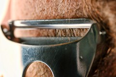 It's A-Peeling To Me (simondownunder) Tags: macromonday itsapeelingtome razor peeling softbox sigma105 70d strobist explore beard macro sigmalens shaving hmm snapseed