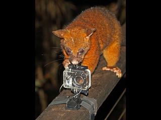 {Possum in camera error}FCC154
