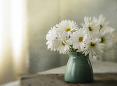 Thank you, Kipp (jm atkinson) Tags: daisy vase window texture sunlight fresh flower 7dwf lensbaby aqua
