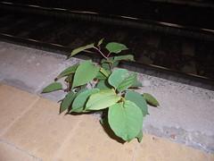 1494 (en-ri) Tags: foglie leaves erbacce sony sonysti marciapiede verde
