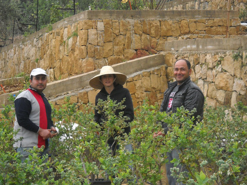 Sarah with Mohamad & Ghannam Inspecting Plants  Mar 25, 2015