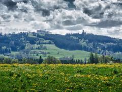 Hohenpeißenberg Frühling