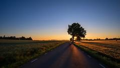 Sunrise road (jarnasen) Tags: road morning sun sunlight color tree sunrise landscape dawn early fuji sweden handheld fields nordic sverige freehand colourful scandinavia risingsun landskap stergtland exposureblend sknninge fujifilmxt1 samyang12mmf2