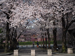 Kyoto 2015 (hunbille) Tags: street japan cherry kyoto blossom district blossoms sakura gion dori hanami shirakawa higashiyama