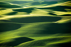 Layers of Green (www.toddklassy.com) Tags: morning light opportunity terrain food sunlight abstract green nature grass barley sunshine horizontal rural sunrise landscape outdoors dawn countryside washington spring scenery pattern glow shadows view natural farm background space wheat country farming cereal scenic nobody shades farmland hills soil beginning rows land pacificnorthwest peas fields wa environment layers crops growing agriculture patchwork distance grassland success hilly emptiness rolling wholesome distant stockphoto contours vast palouse stockphotography travelphotography steptoe colorimage steptoebutte