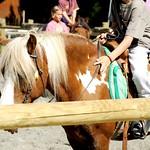 the-ponies