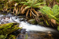 Barrington Tops (laurie.g.w) Tags: park fern water creek forest river highlands rocks stream australia national nsw cascade tops waterway barrington waterscape paddys