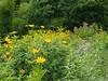 @Gettysburg National Military Park (Celso Kuwajima) Tags: flower landscape us dof unitedstates pennsylvania landmark gettysburg finepix fujifilm x10 fujiastia100f vsco