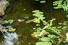 "Pondscape ""Thank you for 9 million + views!!!"" (LarryJay99 ) Tags: sunlight outside pond florida westpalmbeach watersedge canonefs60mmf28macrousm mountsbotanicalgardens canonefs60mmf28macrousa"