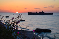 july (Andreeaa P) Tags: pink flowers sea sunrise seaside romania epava