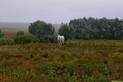 Поле, кусты и деревья, за ними в метрах 300 течет Битюг, а его берега как из ведра поливает ливень. Мы стоим на обочине дороги и у нас только мелко моросит. Одинокая лошадь переживает непогоду, поджав хвост.