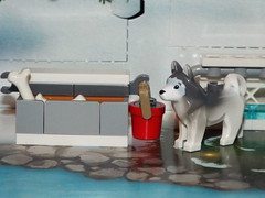 The huskey ready for the big day (Paranoid from suffolk) Tags: 2016 lego dog husky water bucket food day22 advent calendar