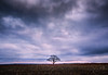 solitude (Nancy Rose) Tags: 780224 tree lonely field corn winter dark sunset clouds overcast sky vast