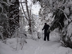Powderland (mag3737) Tags: snow woods forest fromme mtfromme