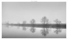 Minimalistarbres (erictrehet) Tags: nikon noir nikkor blanc black brouillard brume reflets riviere river white d610 arbre eau extérieur illeetvilaine fx 1835