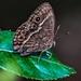 Moth - iSimangaliso Wetland Park, KwaZulu-Natal, South Africa