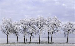 winternederland (willy.sybesma) Tags: willysybesmafotografie wit vrij werk
