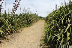 TO THE LIGHTHOUSE (PINOY PHOTOGRAPHER) Tags: manukau auckland newzealand world