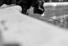 _DSC2241 (julianmartinez_) Tags: cat buddy thirsty pool summer water nikon friend