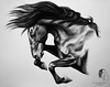 """""""Yearning for Freedom"""" - Spanish stallion (© S. D. 2010 Photography) Tags: horse equine stallion stud spanish andalusian lusitano iberian pre jumping freedom abstract bust portrait black charcoal pencil art drawing rendering painting detailed"""