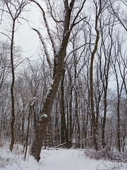 Ravine trail in the snow (Dendroica cerulea) Tags: trail path trees forest snow winter valleyplaceravine ayresbeach redsmarina highlandpark middlesexcounty nj newjersey