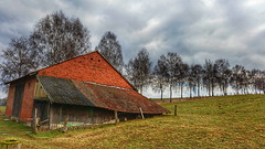 The old barn (RainerSchuetz) Tags: barn tree birches agriculture avenue