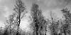 contortion 2468 (s.alt) Tags: reflexion spiegelung reflektierung verzerrung mirroring lightreflection reflection contortion deformation bias distraktion distraction nature natureunveiled winter cold kalt branch baum tree ast bäume naturbelassen chaos kontrast highcontrast abstract blackwhite bw schwarzweiss sw water surface silhouette