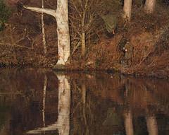2016_12_0546 (petermit2) Tags: clumberpark clumber sherwoodforest sherwood nottinghamshire nationaltrust nt fisherman fishing