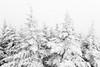 White firs (Papaye_verte) Tags: arbre winter tree neige snow piopolis québec canada montmégantic