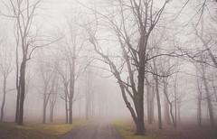 forêt (cébé céline) Tags: nikond7200 atmosphère nature paysage ambiance brume brouillard montréal arbre sentier montroyal matin tranquillité