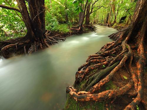 Rapid Creek