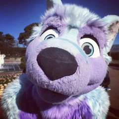 Noseboop! #cute #toyohashi #noseboop #purple #blue #fluffy #zoo (Keenora Fluffball) Tags: keenora fursuit furry kee