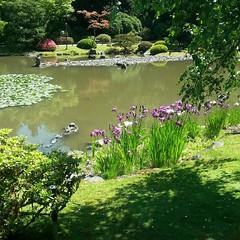 #Japanese garden