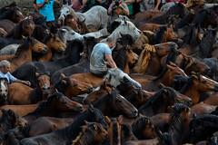 rapa das bestas_2015_361 (Cesar_AlGa) Tags: horse naturaleza animals caballos galicia animales sabucedo rapadasbestas aloitadores nikond3100 galiciamxica cesaralga