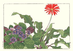 African daisy and African violet (Japanese Flower and Bird Art) Tags: flower art japan japanese book african picture violet gerbera daisy gesneriaceae ionantha asteraceae woodblock nihonga saintpaulia konan jamesonii tanigami readercollection