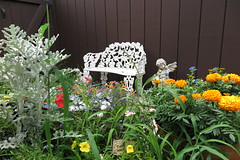 it's a jungle out there (Dotsy McCurly) Tags: flowers red orange nature grass yellow yard weeds chair pretty