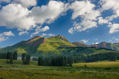Beautiful morning for wildflower photography (Denverphotoscapes) Tags: plants usa plant clouds workshop co wildflowers crestedbutte captureone vascularplants tracheophyta projectweather tracheophytes wildflowersatgunnisonnationalforest