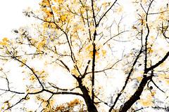 Orange Trees (wide-angle.de) Tags: digital germany de top100 top500 treesi y201212 y201212treestop500top100