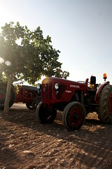 IMG_0373 (ACATCT) Tags: old espaa tractor spain traktor agosto toledo antiguo massey pistacho tembleque barreiros 2015 bustards perdices liebres avutardas ff30ds r350s