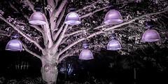 The Tree Of Lights (Sean Batten) Tags: brentford england unitedkingdom gb syonpark tree lights night nighttime nikon df 35mm
