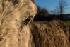 L'Oeil (GLVF) Tags: âne donkey oeil animal eye brioude hauteloire auvergne france closeup détail dof depthoffield profondeurdechamp poil poils hairs field champ agriculture