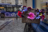 Bikes of Oxford - rainy day edit.   (148of365) (Reckless Times) Tags: oxford bike bikes bus bycycle basket flower flowers bright colour color colourful cherr cheer cheery wet rain damp weather cold winter miserable day project 365 nikon d750