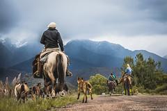 Entre montañas... (alexissebastian77) Tags: montañas nubes caballos perros cielo nuebes calle tropilla gauchos manzano historico tunuyan mendoza argentina alexis araya campo