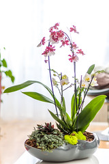orchidee in schaal (amlammers) Tags: orchid orchidee schaal colors flower bloem