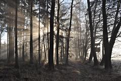 Ereuchtung - Explore 30.12.16 (Uli He - Fotofee) Tags: nebel nebelbogen naturphänomen licht lichtbrechung wassertröpfchen ulrike ulrikehe uli ulihe ulrikehergert hergert fotofee nikon nikond90