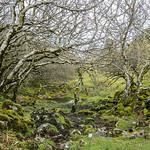 Árboles en Fairy Glen thumbnail