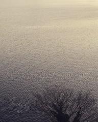 芦ノ湖の水紋 #芦ノ湖 #箱根 #湖 #水紋 #水面 #湖面 #旅 #旅行 #朝 #冬 #写真好きな人と繋がりたい #写真撮ってる人と繋がりたい #japan #beautiful #naturelovers #nature #lake #lakeashi #hakone #morning #watersurface #lakesurface #きれい #美しい #絶景 #funtotrip #winter #scenery (tsukataiphoto) Tags: 芦ノ湖 箱根 湖 水紋 水面 湖面 旅 旅行 朝 冬 写真好きな人と繋がりたい 写真撮ってる人と繋がりたい japan beautiful naturelovers nature lake lakeashi hakone morning watersurface lakesurface きれい 美しい 絶景 funtotrip winter scenery